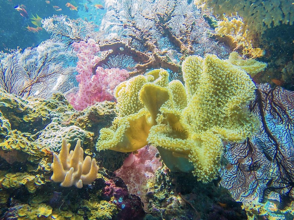 Ocean Ventures Fiji
